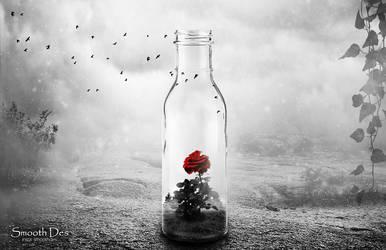 Rose by Mazaj2b