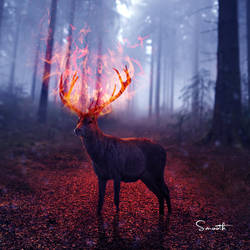 deer1 by Mazaj2b