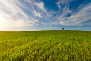 Meadow by nkaidash