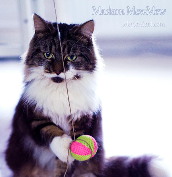 I am not interested by MadamMewMew