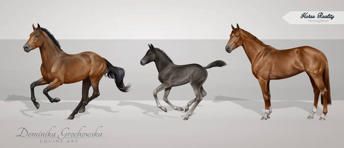 Commission:  Thoroughbred Grayscales