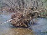 Flood photos 4