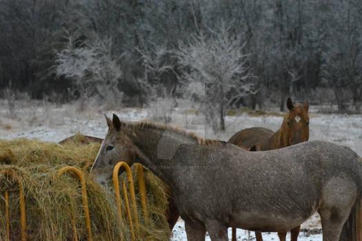 Horses on Ice