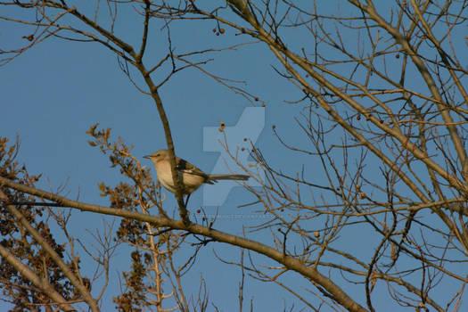 MOARBIRD