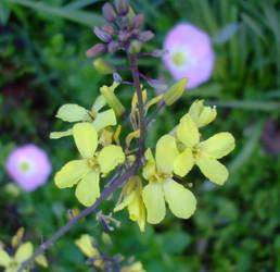April flowers 12