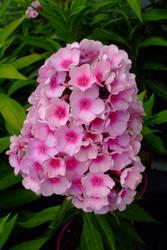 April flowers 15