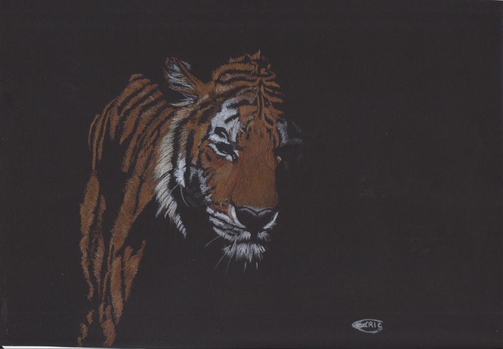 Tiger,tiger.... by ZaphodX23