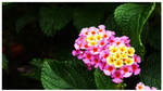 Flowers by frienkink