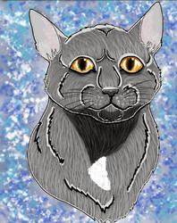 My cat Riki