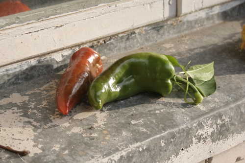 peppers by bliudroid