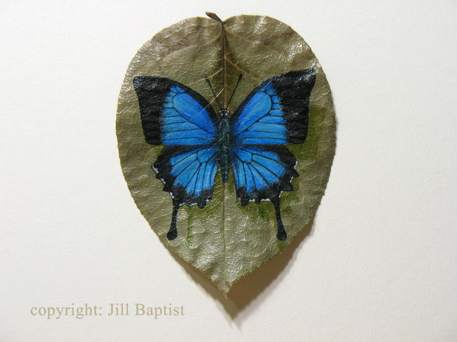 Ulysses Butterfly by catnmaus