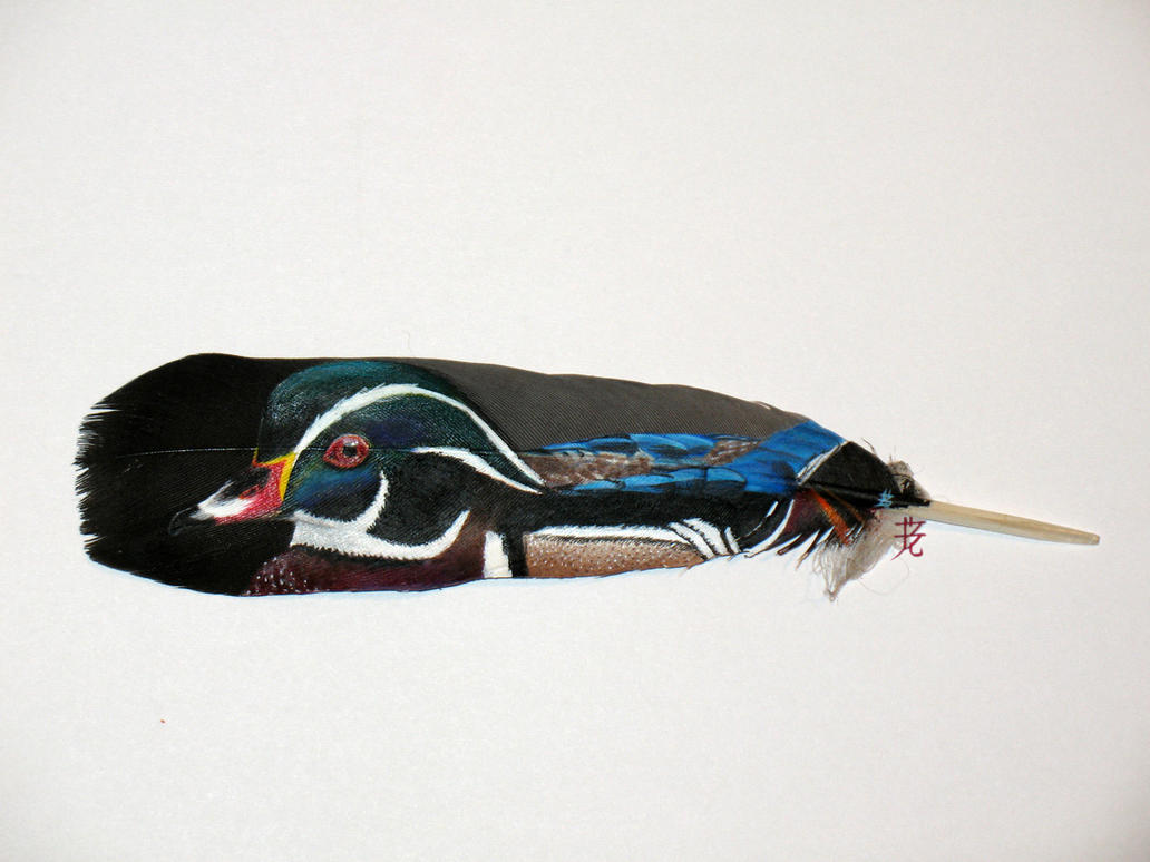 Wood Duck by catnmaus