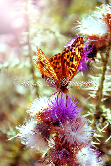 Wings of a butterfly! by Catherine-Di