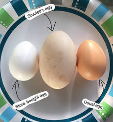 Very Big Egg