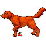 Irish Setter Pointing by TheFallenCherry