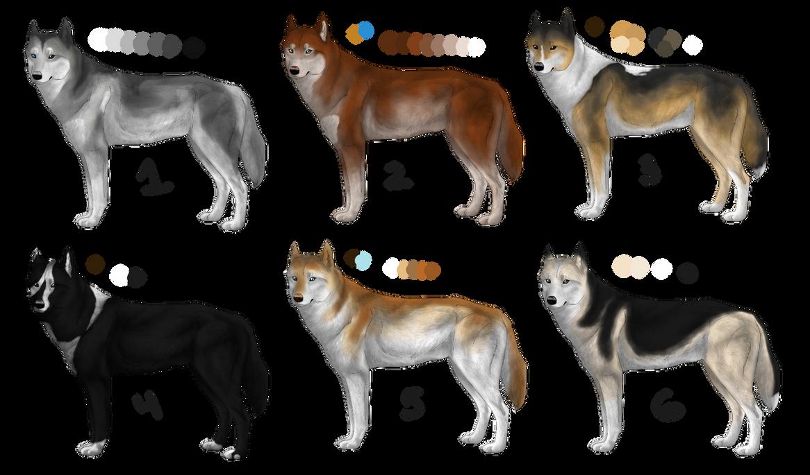 Siberian Huskies for Mush Kennels by MidnightAyaChan on DeviantArt