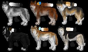 Siberian Huskies for Mush Kennels