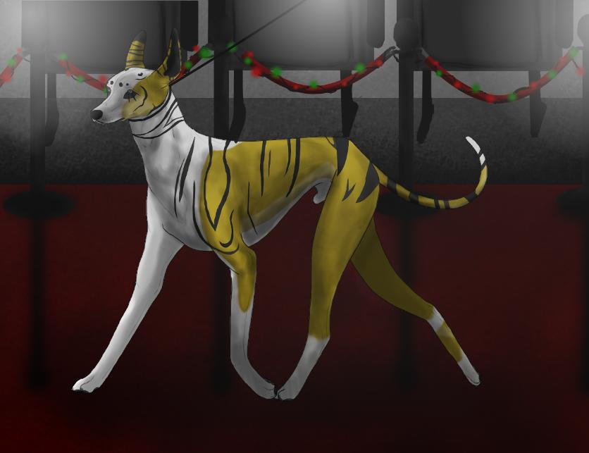 Night's White Winter Sighthound Show Conf - Quryan by MidnightAyaChan