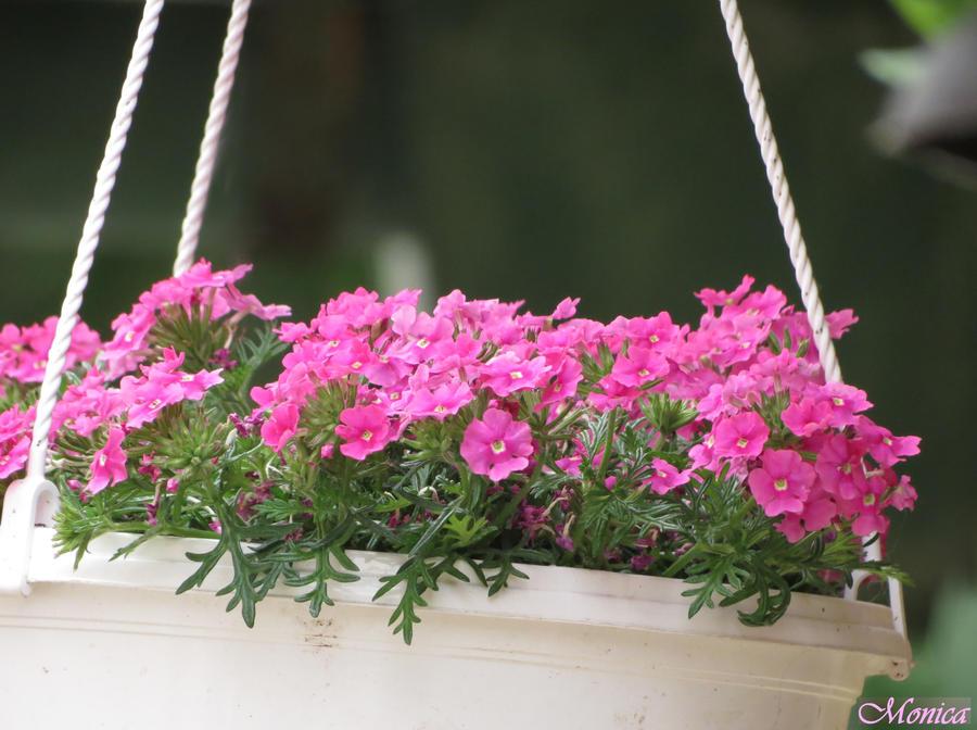 Pink essence by MonicaFlower