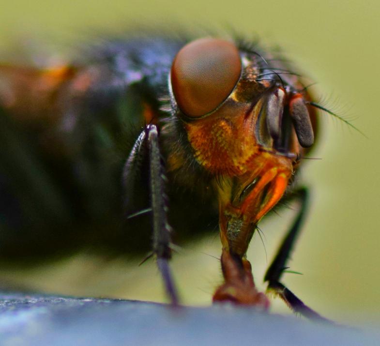 Fly Face 1 by NicolasSarkozy