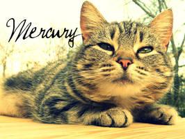 Mercury is Cute