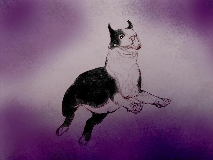 Howie in purple by Vivienne-Mercier