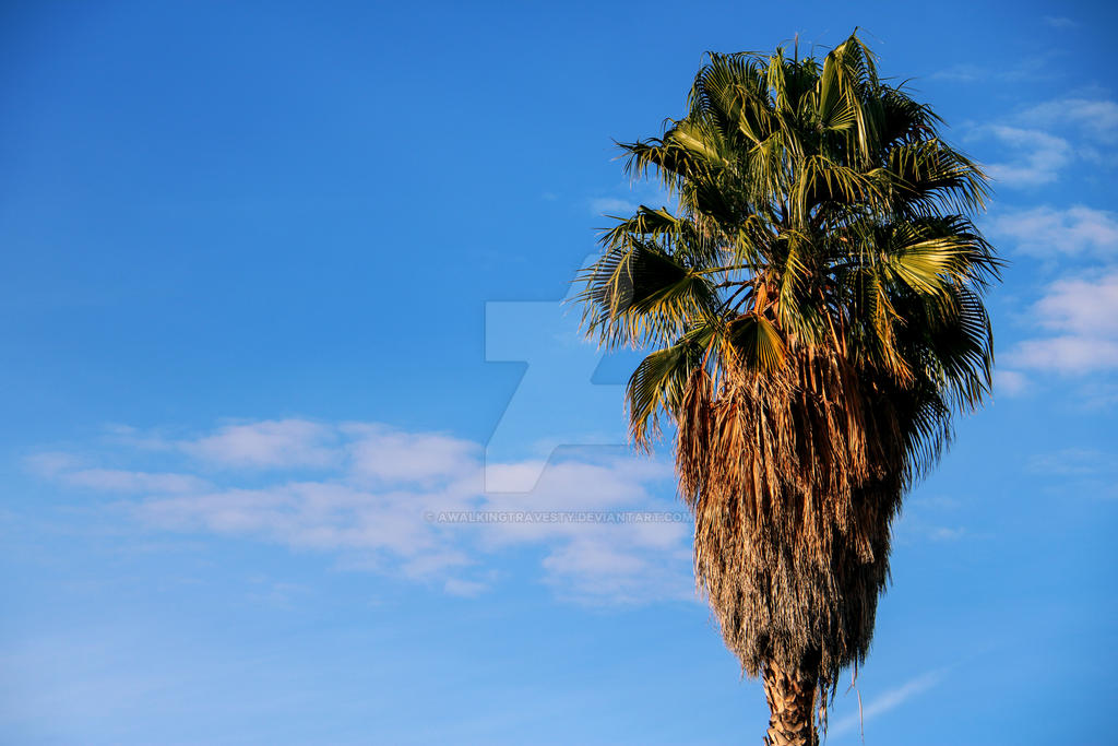La Brea Palm by awalkingtravesty