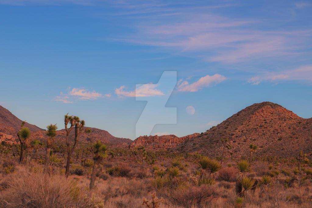 Mojave Moon by awalkingtravesty