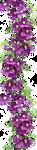 Clematis Lady Betty Balfour by LilipilySpirit