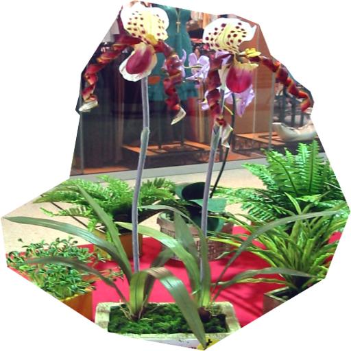 Cream Maroon Lilies by LilipilySpirit