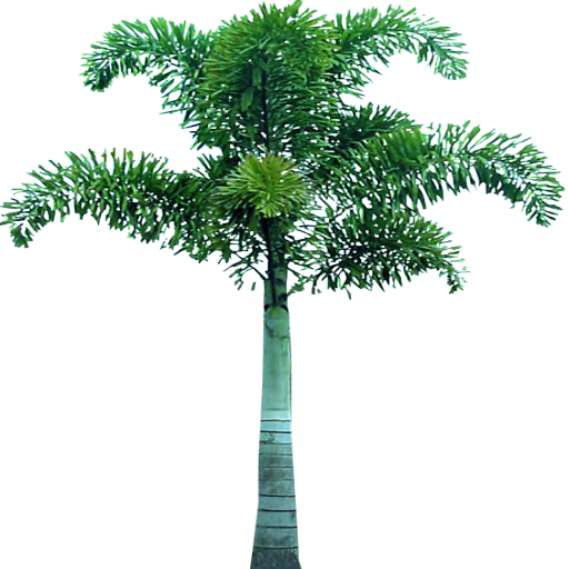Palm Tree PNG Images Download 81258 PNG Resources with