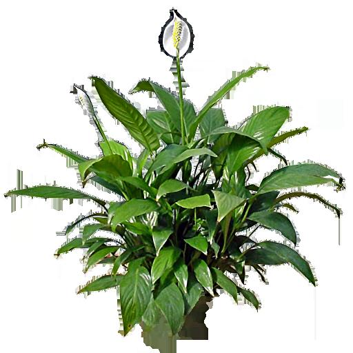 white flower wallpaper for mobile