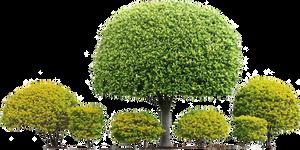 Topiary Hedged Shrub row