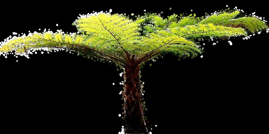 Tree Fern By Lilipilyspirit On Deviantart