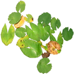 Water Lily Pads - small
