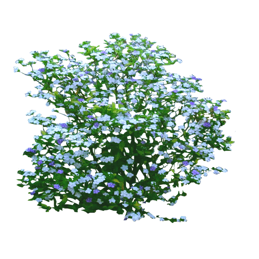 Small Flower Bushes