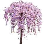 Pink Weeping Cherry Tree in Bloom
