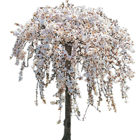 White Weeping Cherry Tree in Bloom by LilipilySpirit