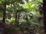 Palms on a Slope