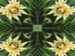 Abstract044 Wallpaper