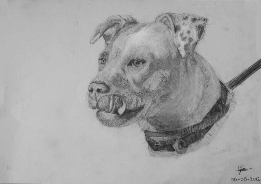 Pencil Portrait Argentine Pitbull. by Lynnetje on DeviantArt