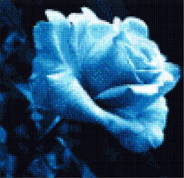 Blue Rose by DenmarkKittenKiss