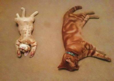 cats by Lasla