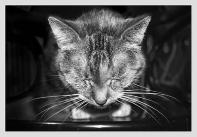 next cat xD by Lasla