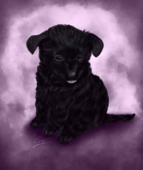 Pet Portrait: Rocky
