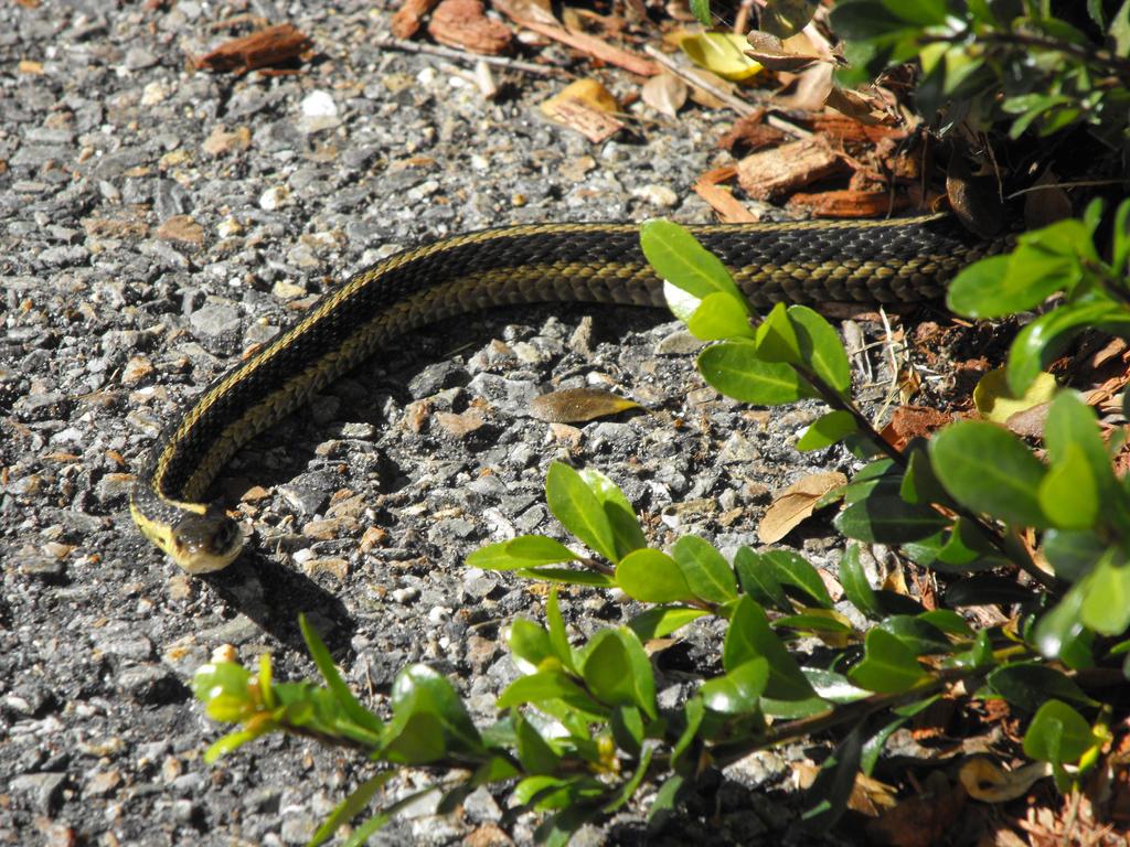 Snake by suzukoyan