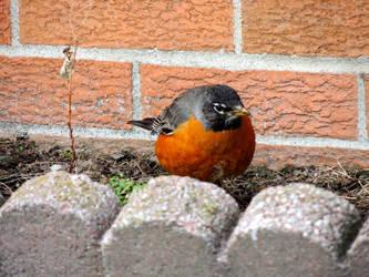 Red Round Robin
