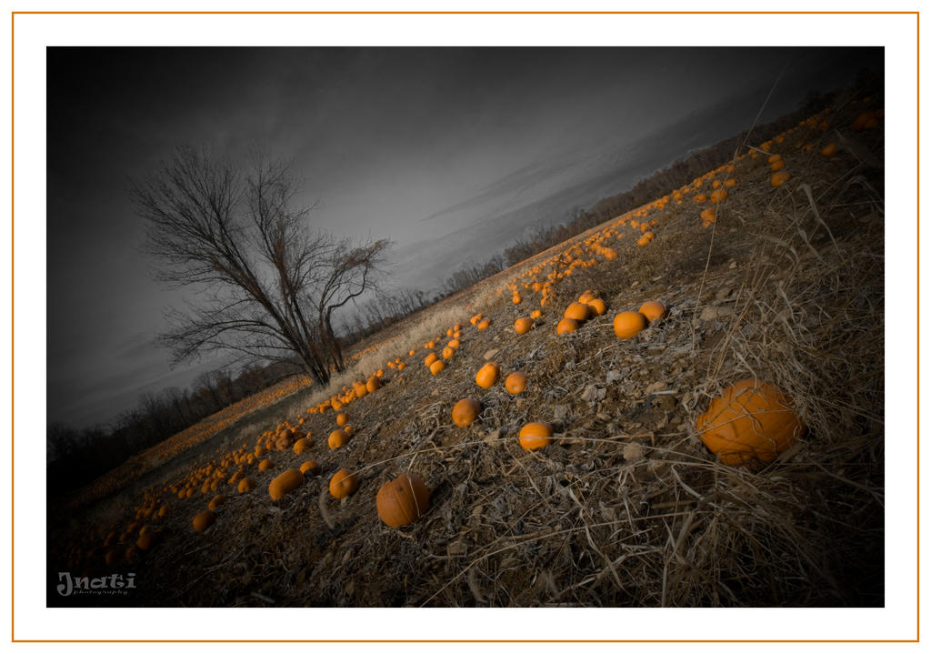 Pumpkin Patch 2 by jnati