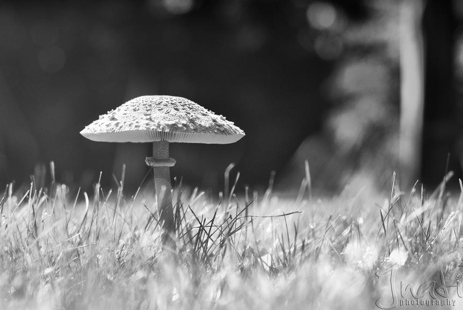 Mushroom by jnati