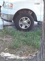 Tire Cat